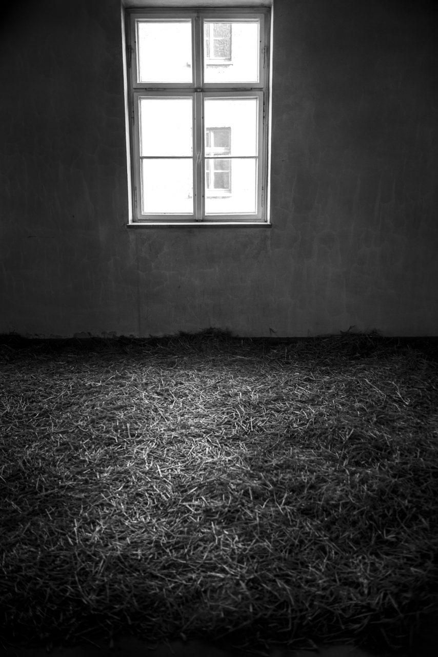 Ana Matos - Auschwitz 2015-06