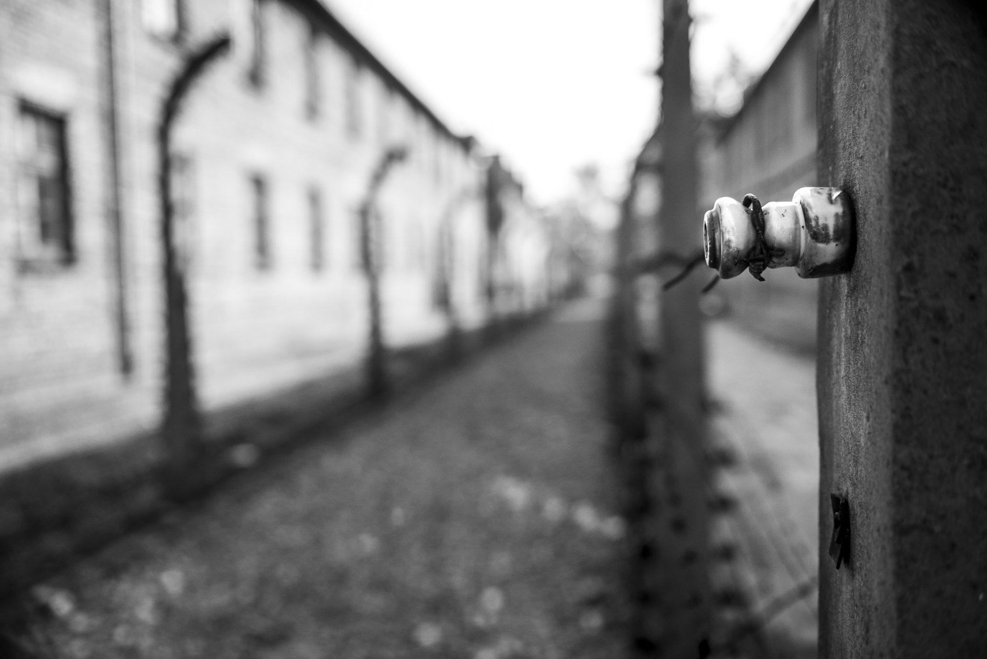 Ana Matos - Auschwitz 2015-17